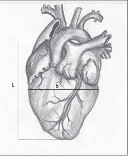 Figure 1: Measurements done on hearts L- Length of heart, B- Breadth of heart
